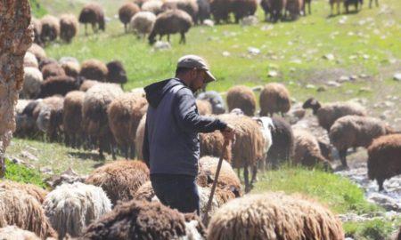 Shepherd Erdal Montenegro Instagram Account